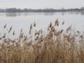 Blick zur Vogelinsel im Altmuehlsee im Herbst