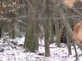 Burgstall im Winter