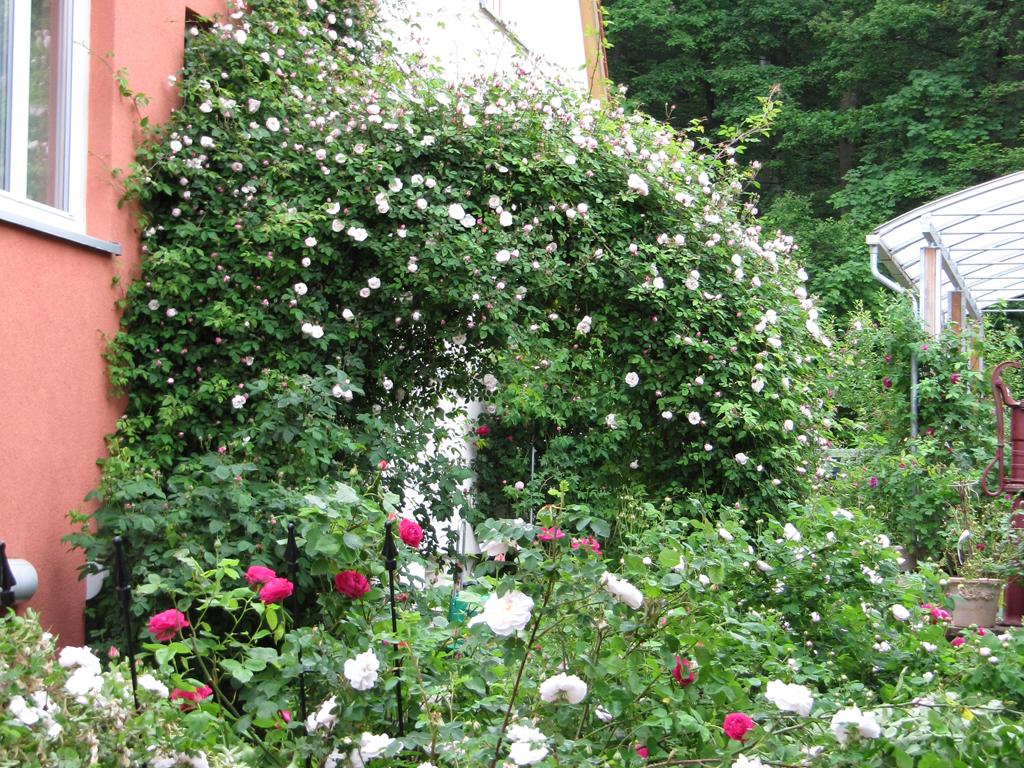 Rosenbogen Eingang