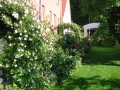 Rosenrabatte - Sicht vom Garten