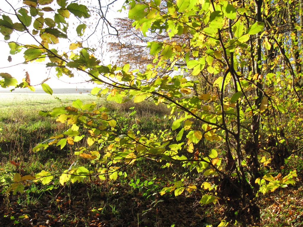 Burgstall im Herbst
