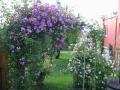 Rosen Pavillon vor dem Altbau